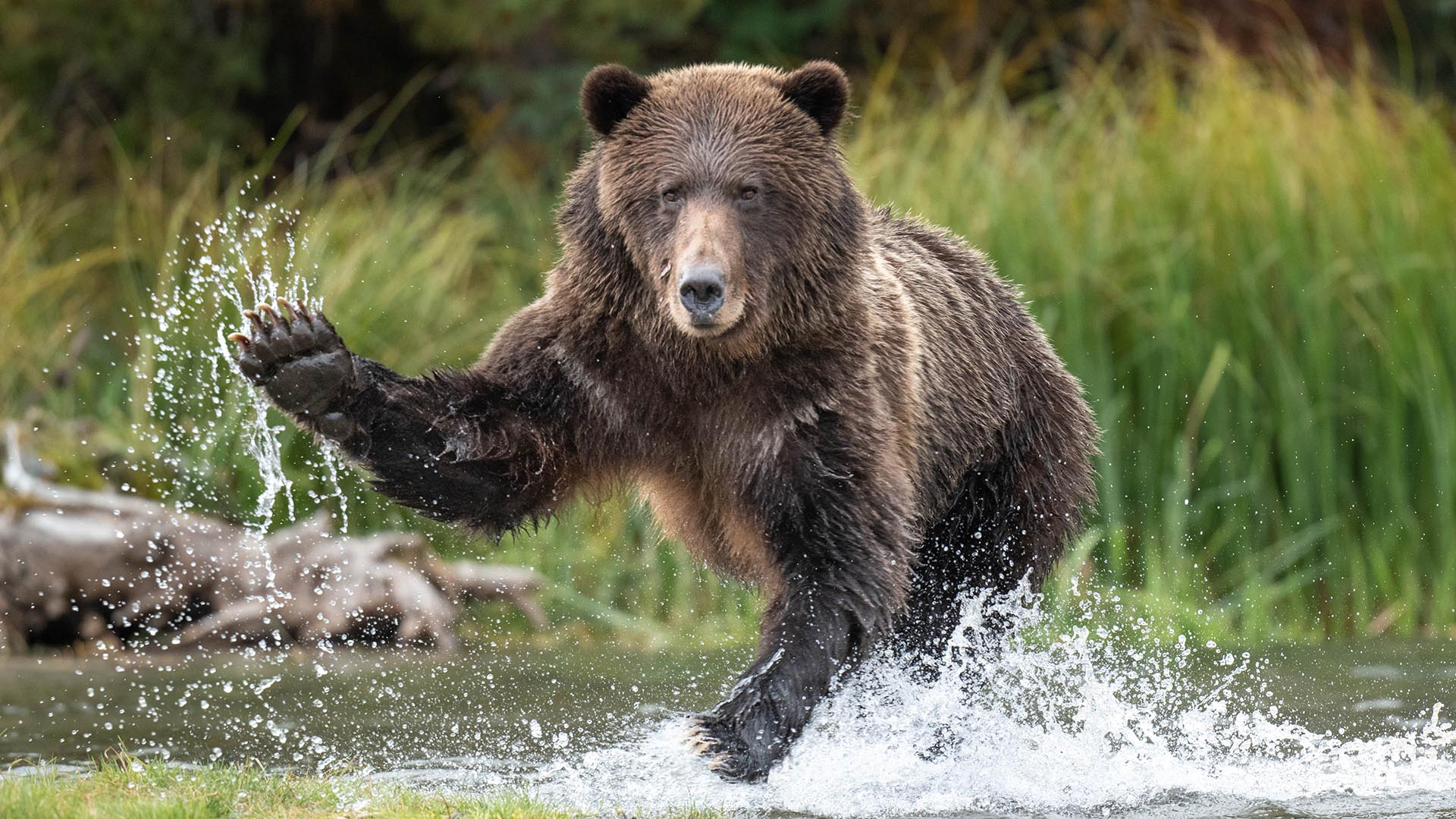 How to avoid bear confrontations in the backcountry